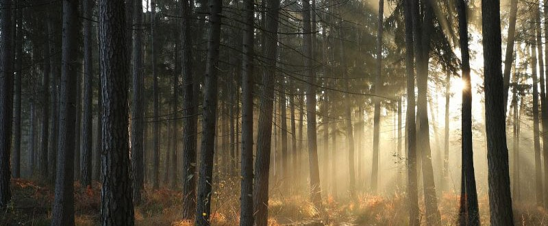 Image of a wooded forest with the sun shining through the trees. This image illustrates the hope that sexual assault survivors in Louisville, CO can find in therapy for sexual assault.   80304   80303   80301